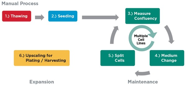 Automation Application Note Continuous Cell Culture Workflow