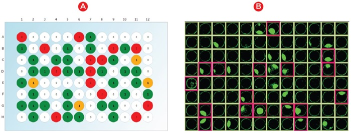 Automation Cell Line Development Hit Picking Figure 1