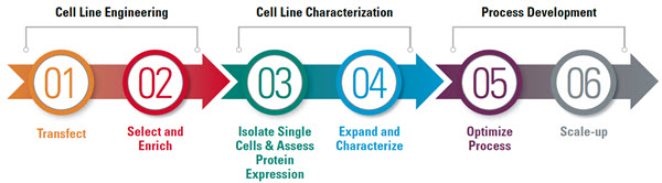 Learn about the solutions for each critical step of the process of developing a mammalian cell line for recombinant protein manufacturing using a methotrexate (MTX) amplification system, one of many integrated transfection methods by Beckman Coulter.