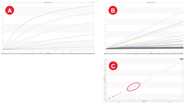 IgG Quantification