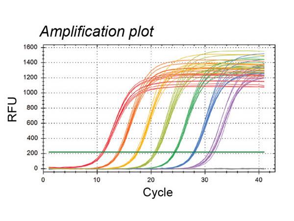 PCR Amplification Plot