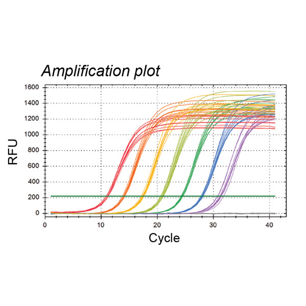 PCR Amplification Plot