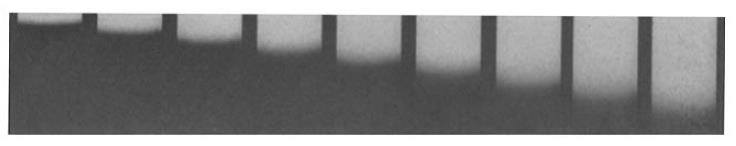 Sedimentation of crystalline egg albumin in 1% solution at a speed of 60,000 RPM; photographs taken at 20-minute intervals