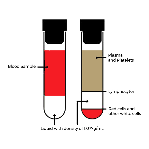 Force Flow Of Blood: Particle Separation