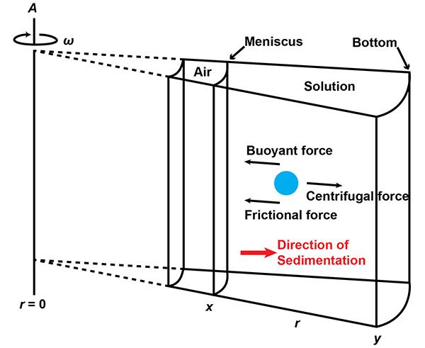 Аналитическое ультрацентрифугирование: уникальный метод