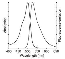 AO staining of leukocytes fluorescence emission