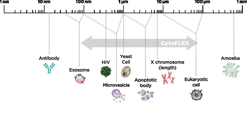 Diagrama Cytoflex de tamaño de partículas