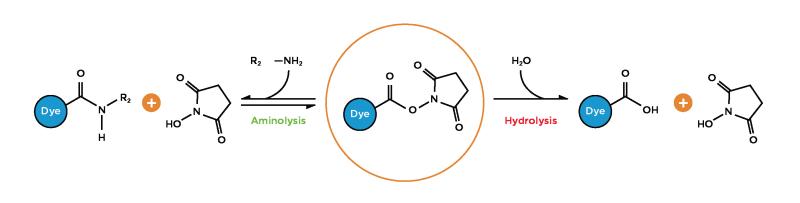 Dye chemistry reactive amine reactions