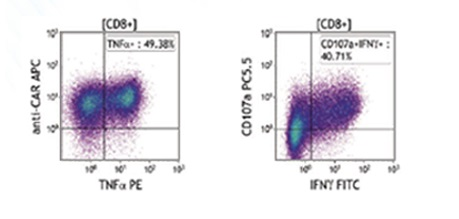 DURAClone IF flow cytometry reagent CD8