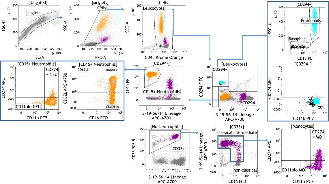 Identification of Granulocytes in Human Whole Blood using flow cytometry and the DURAClone IM Granulocyte kit
