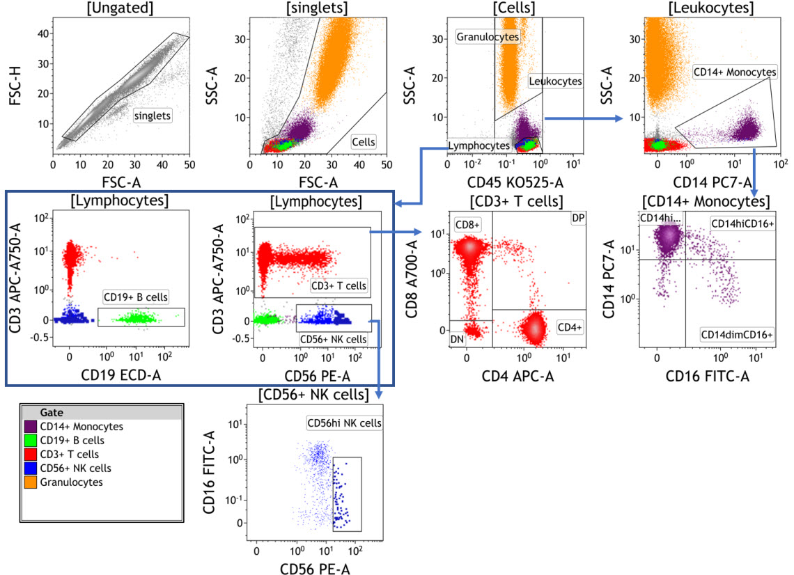 DURAClone IM Phenotyping Basic Antibody Panel data collecting with the CytoFLEX flow cytometer