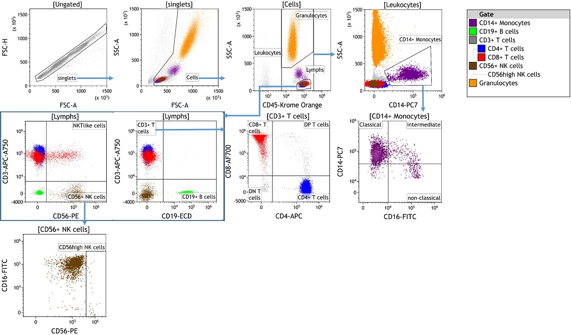 DURAClone IM Phenotyping Basic Antibody Panel data acquired with the CytoFLEX flow cytometer