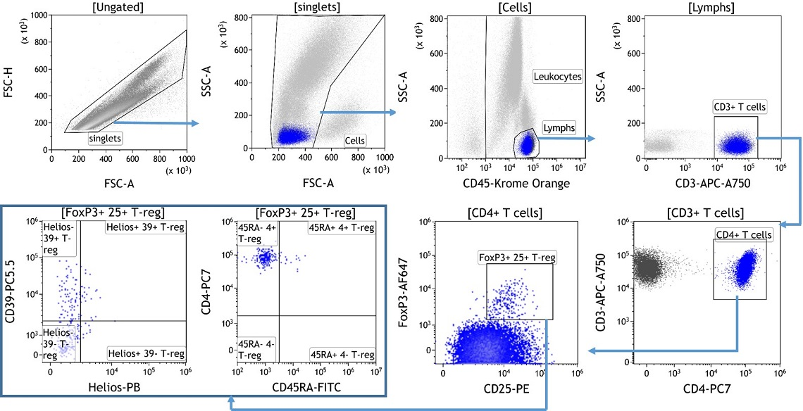 Identification of Regulatory T Cell Subpopulations using flow cytometry and the DURAClone IM Treg kit