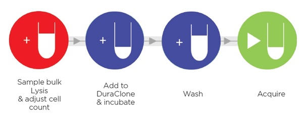 DuraClone RE Workflow Illustration