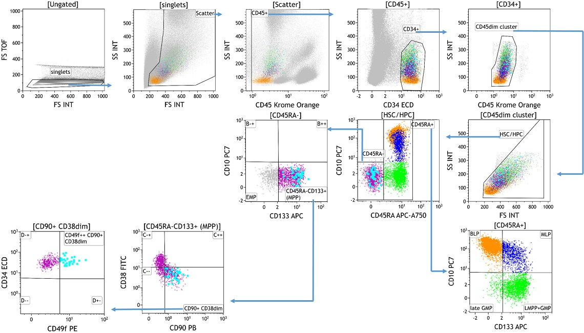 Example data showing gating strategy for DURAClone SC Hematopoietic Stem Cell Antibody Panel