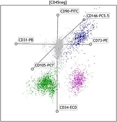 Kaluza Analysis radar plot showing MSC populations in Fat Tissue using DURAClone SC Mesenchymal kit