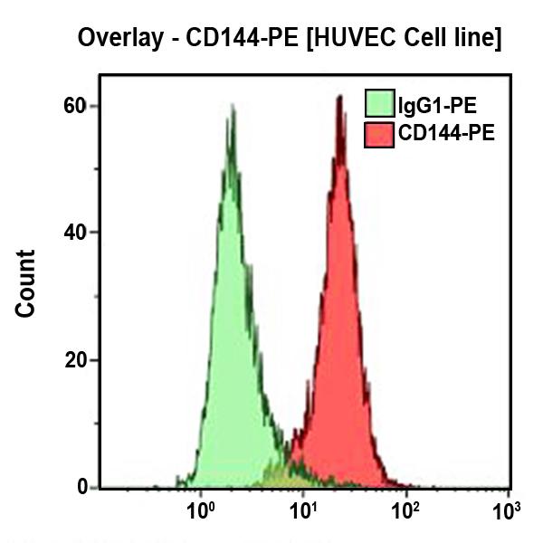 CD144-PE