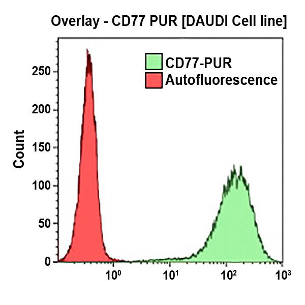 CD77-UNLB
