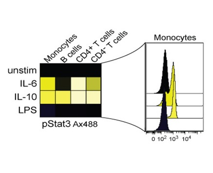 Heatmap view of Stat3 phosphorylation of different cellular subsets after cytokine treatment