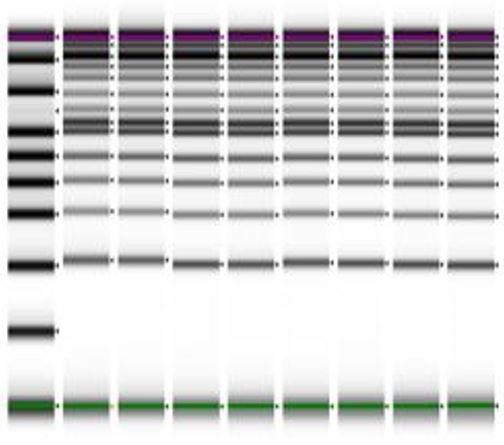 Genomics EMnetik PCR Performance Figure 2