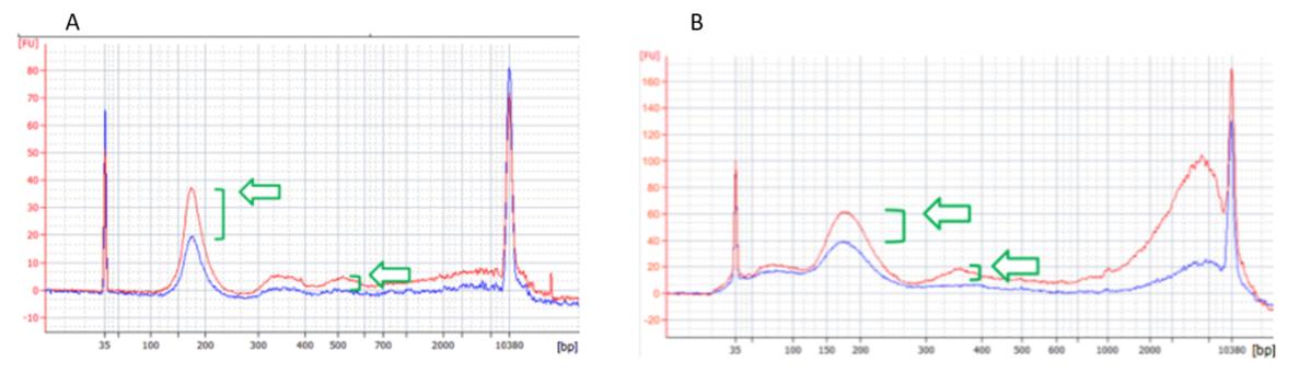 Charakterisierung der genomischen cfDNA-Isolation