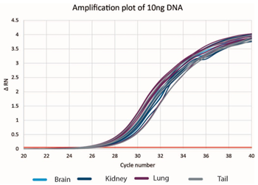 Genomics DNAdvance Tissue Amplify DNA