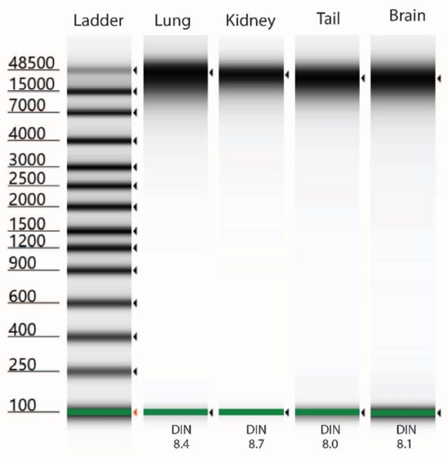Genomics DNAdvance from Tissue Types