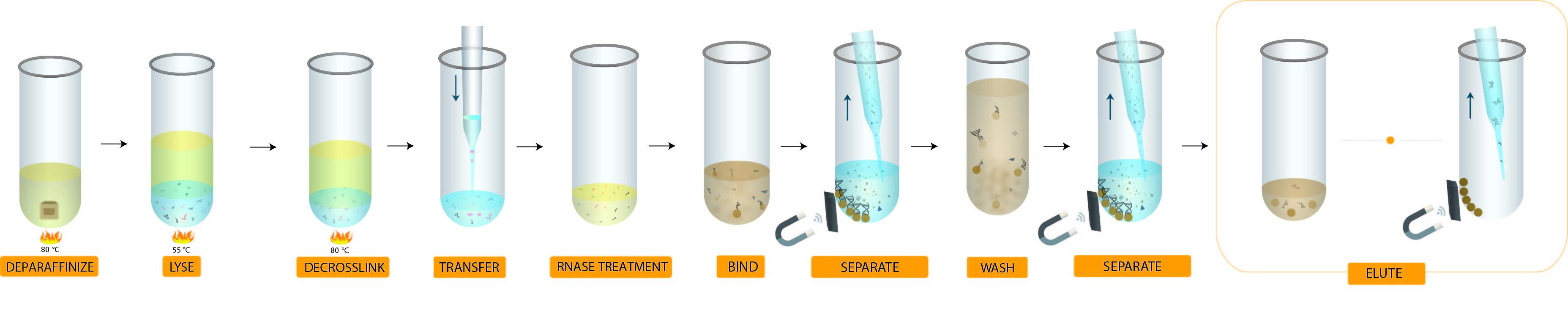 Genomics FormaPure XL DNA Workflow
