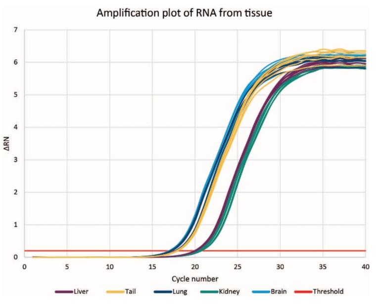 Genomics RNAdvance Tissue RIN 점수 그림 6