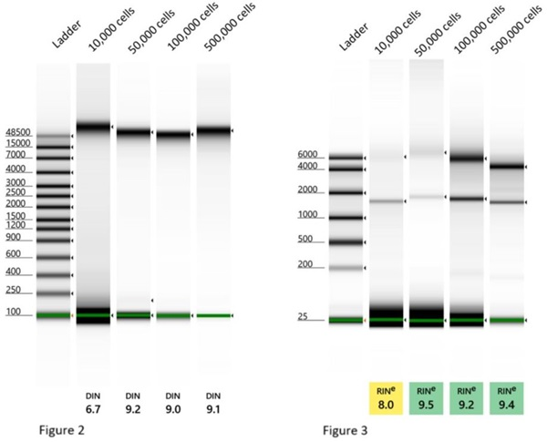 Genomics POP DNA and RNA Isolation from Cells and Tissues Figures 2 and 3