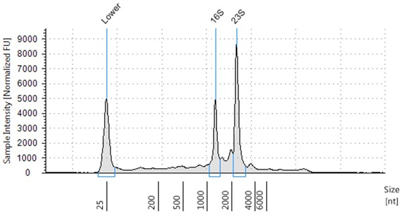 Genomics PoP RNA Isolation from Bacteria Figure 2