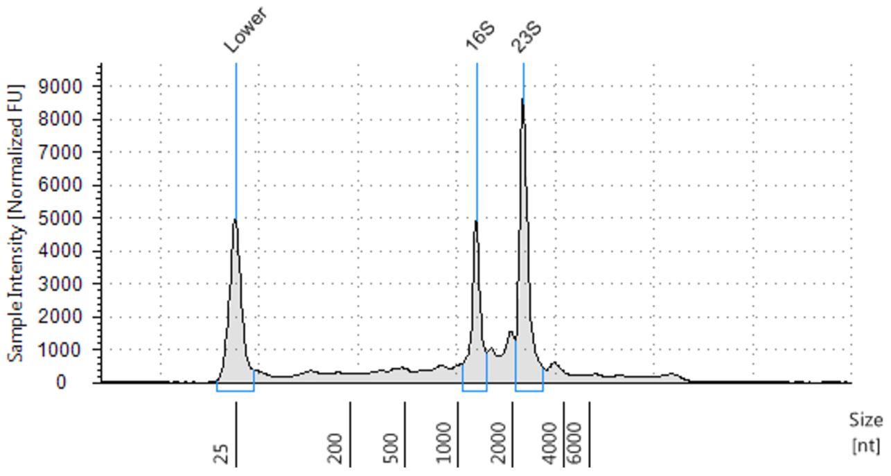 Genómica PoP Aislamiento de ARN de bacterias Figura 2