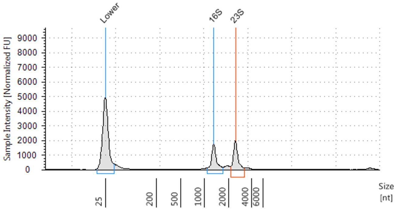Genómica PoP Aislamiento de ARN de bacterias Figura 3