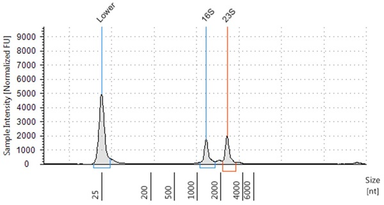 Genomics PoP RNA Isolation from Bacteria Figure 3