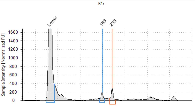 Genomics PoP RNA Isolation from Bacteria Figure 4