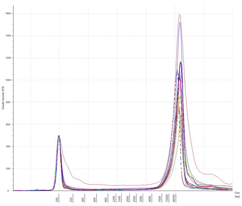 Genomics Poster Agilent TapeStation Figure 2
