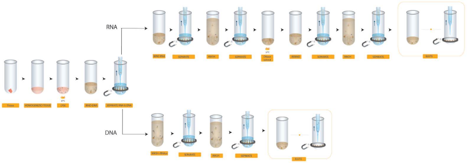 Póster genómico Flujo de trabajo para diversos tipos de muestras