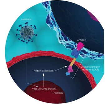 CAR-T cell therapy antigen graphic