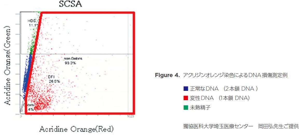 アクリジンオレンジ染色によるDNA損傷測定例