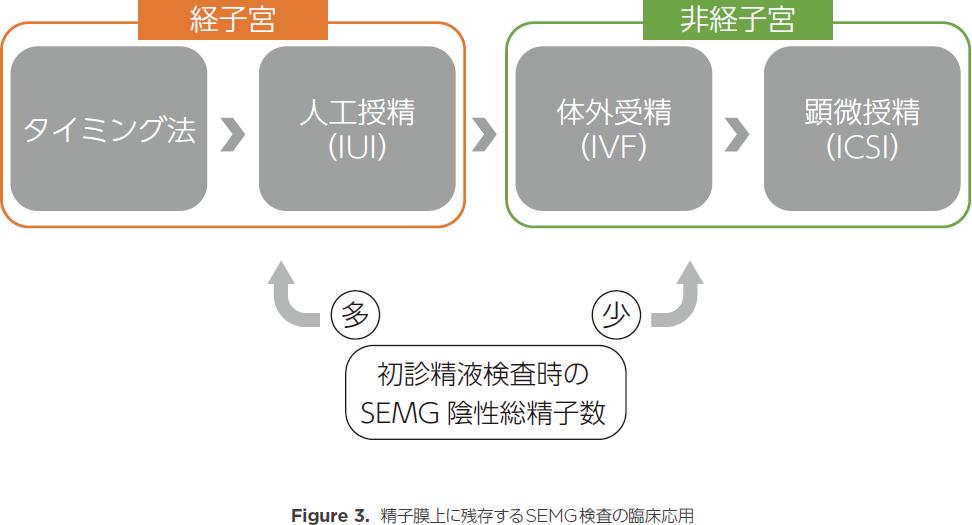 精子膜上に残存するSEMG検査の臨床応用