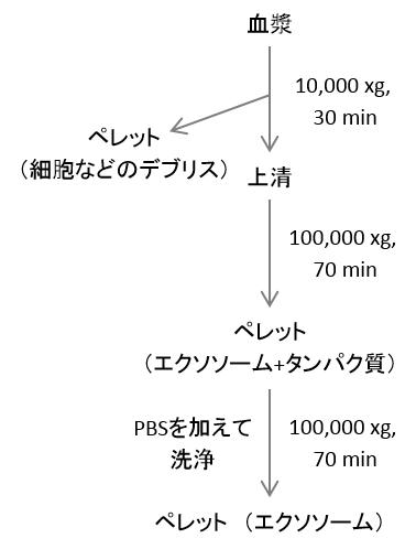 エクソソーム分離のプロトコル