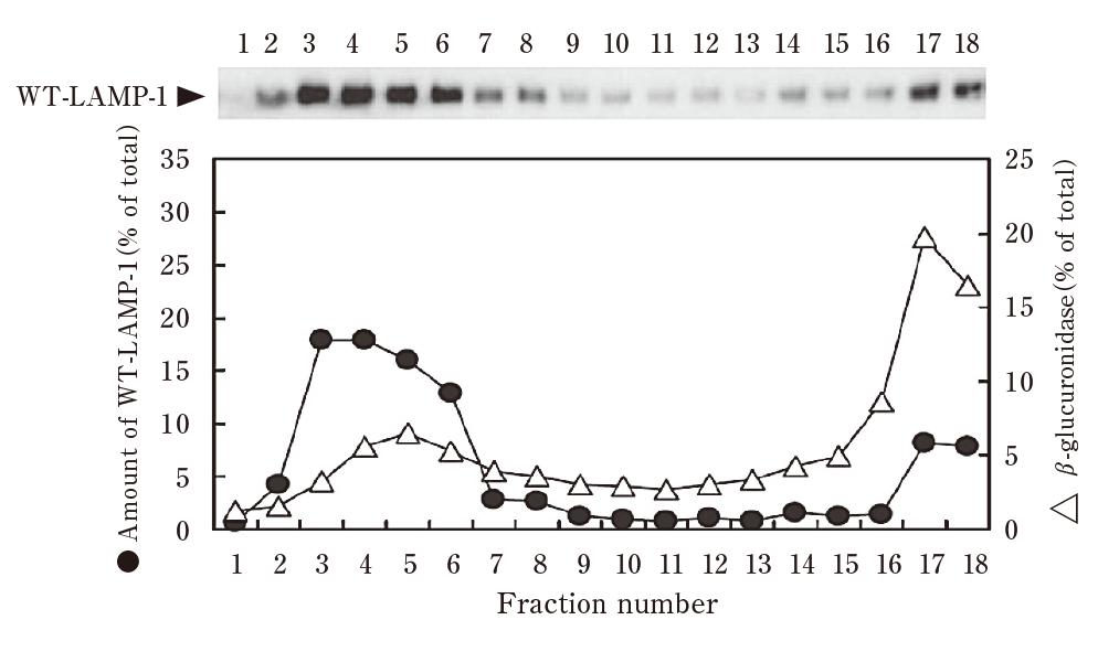 Percollを用いた細胞分画例
