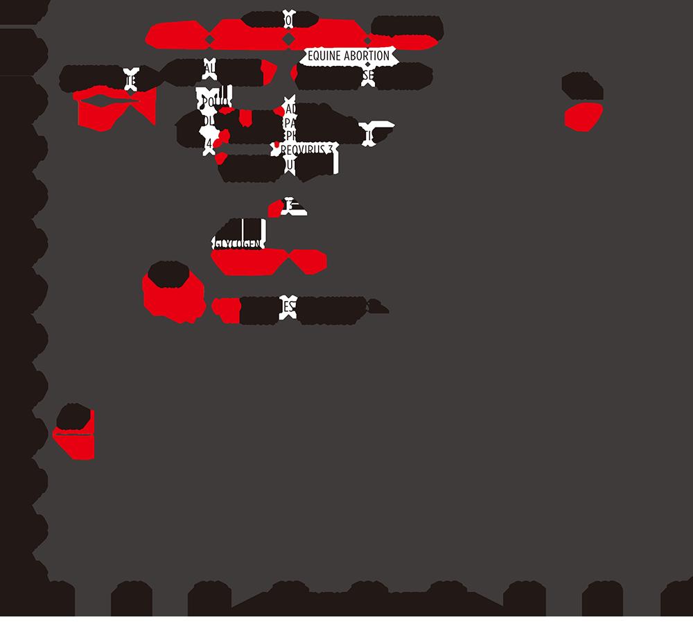 Graph- Virus Purification Fundamentals