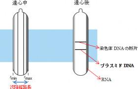 Diagram 2 - Dr. Beckman Column v16
