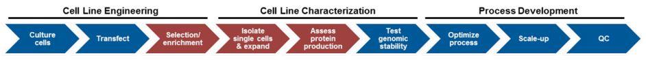 Cell Line Development Process