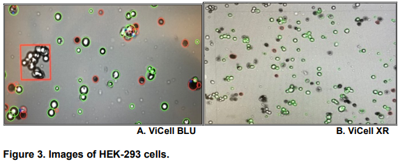 Figure 3 - Cell Line Development
