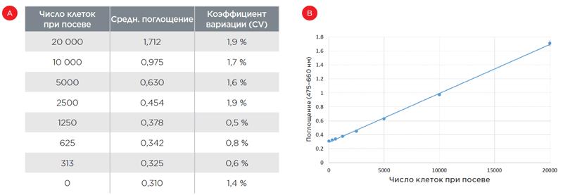 Анализ количества клеток методом XTT