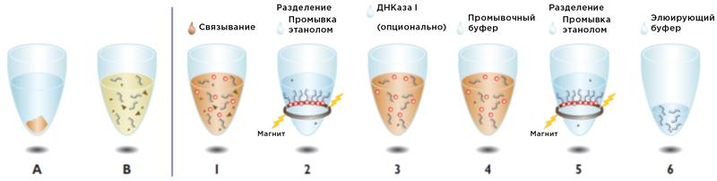 Рабочий процесс выделения РНК с Beckman Coulter Agencourt RNAdvance Tissue