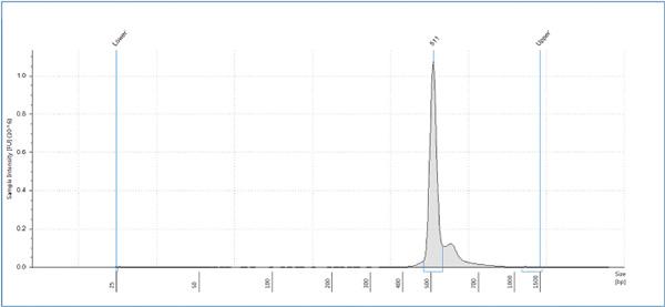 Электрофореграмма показывает, что распределиение длин фрагментов образца находится в ожидаемой области