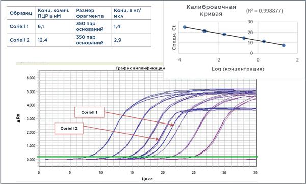График амплификации и калибровочная кривая для KAPA Library Quantification Kit и концентрации ДНК из института Coriell, рассчитанные на основе кривой